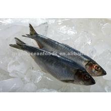 Frozen herring fish fillet