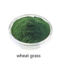 Buy online active ingredients wheat grass powder