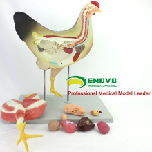 MODELO VETERINARIO AL POR MAYOR 12009 Medical Anatomical 8 Parts Chicken Model