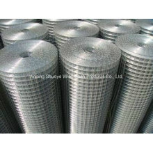 Welded Wire Mesh for Fence (China Factory)