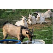 Panneaux de clôture de fil de porc