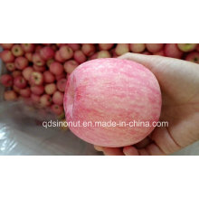 2015crop FUJI Apple (super quality)