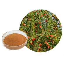 Herba Goji Berry Extract Powder