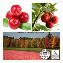 Hot Sale extrait de jus de canneberge Extrait de cranberry en poudre