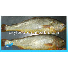 FROZEN YELLOW CROAKER WHOLE ROUND