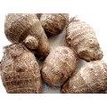 Taro fresco de buena calidad para la venta