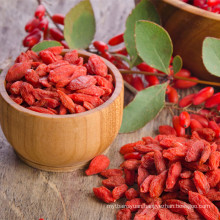 Free Sample 220-280granule/50g Goji Berry With Best Price