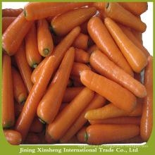 China cenouras frescas naturais para venda