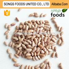 Viele Arten von Bohnen
