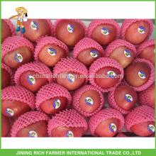 Export Chinesische Konventionelle Formen Obst Grade Eine frische Apfel Yantai Fuji Apfel Frucht mit besten Preis