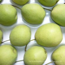 Poire de Shandong vert frais pour le marché de l'Inde