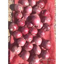 Exportar nuevo cultivo buena calidad competitiva 3-5cm cebolla roja