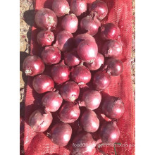 Export New Crop Good Quality Competitive 3-5cm Red Onion