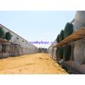 Casa de aves de capoeira pré-fabricada com estrutura de aço e equipamento automático