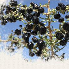 Medlar Glycine Betaine Vitamin Polysaccharides Black Wolfberrry Fruit