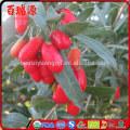 Bulk dice wholesale goji berry ningxia goji Berry makes goji berry extract Top quality