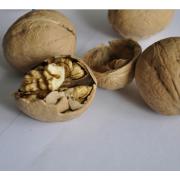 Wholesale Natural Walnut Unshelled