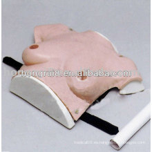 HR / F7C modelo de examen de mama vivo, Modelo de mama de enseñanza femenina