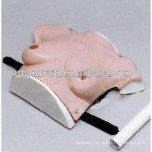 HR / F7C Яркая модель обследования груди, женская модель груди