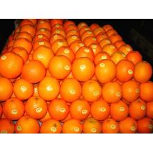 China Lieferant Frische Mandarine Orange