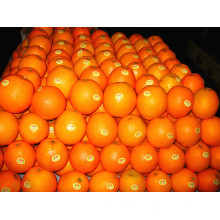 Proveedor de China Fresh Mandarin Orange