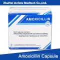 Amoxicillin Capsule Carton Packaging