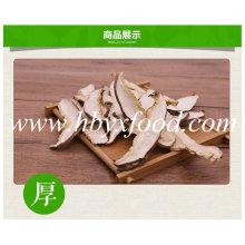 Fatia saudável orgânica do cogumelo de Shiitake de Hubei