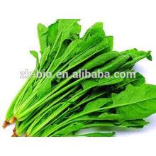 Polvo de hojas de espinaca orgánica