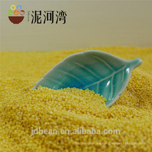 Mijo amarillo mijo amarillo broomcorn 8311