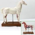 A03 (12003) Acupuncture anatomique du cheval en plastique du vétérinaire éducatif modèles 12003
