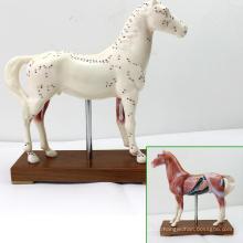 Modelos anatômicos da acupuntura do cavalo plástico do veterinário educacional de A03 (12003)
