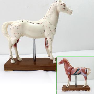 А03(12003) Пластиковые образовательного ветеринара лошадь анатомические модели иглоукалывания 12003