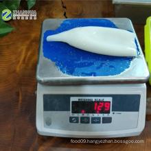 Squid tube U5 well cheaned white meat IQF