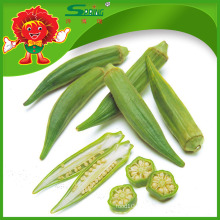 Yunnan Native Vegetables fornecedor chinês de quiabo congelado