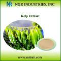 Poudre de varech naturel des algues de varech séché