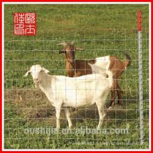 Fermeture d'animaux (usine et exportateur)