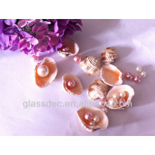 seashell come from nature with pearls mixed