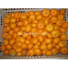 Fresh Sweet Baby mandarin