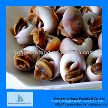 excellent frozen fine quality inexpensive moon snail
