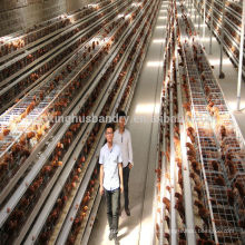 Certificado Soncap granjas de pollo criando jaula de pollo