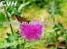GMP Manufacturer Supply 100% Natural Milk Thistle Extract