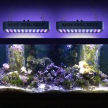 Excelente tanque de água doce levou luzes do aquário