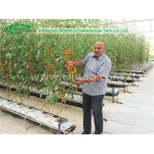 Hydroponics System for Tomato Greenhouse