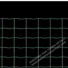 Green Coated Welded Holland Wire Mesh
