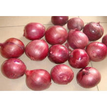 New Crop Fresh Yellow Onion (5-8CM)