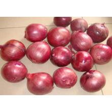 Cebolla roja de la buena calidad de la buena cosecha de la exportación del 100%