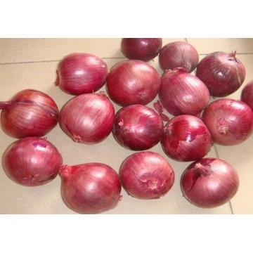 New Crop Fresh Yellow Onion (5-8CM)