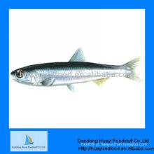 Congelados de anchova de frutos do mar