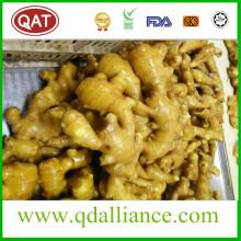 Global Gap Semi Dry Ginger with EU Standard