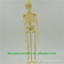 Excelente calidad PNT-0107 esqueleto articulado